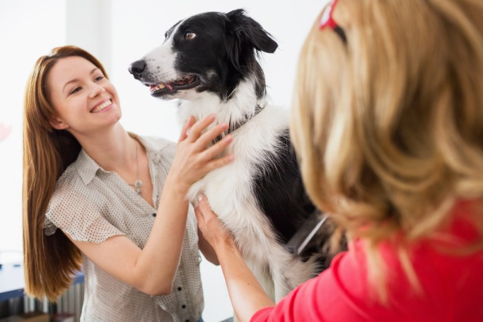 Spa services image - Green Acres Pet Resort