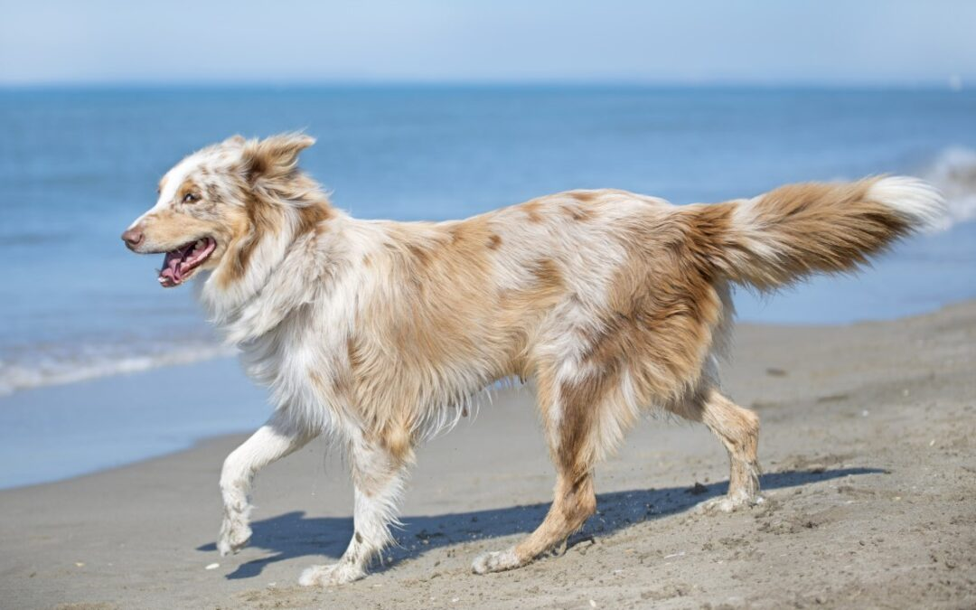 Protect Your Pup with These 6 Pet Safety Tips for Summer