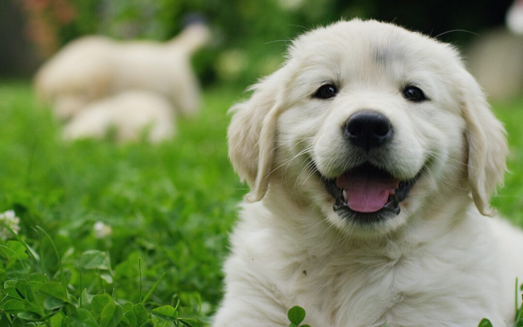 Socialize a Puppy Early to Set the Stage for Success