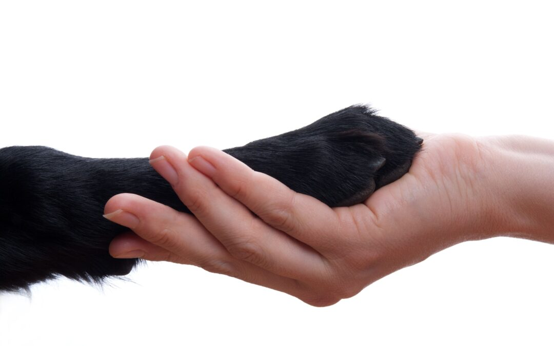 How to Make Greeting a New Dog a Great Experience