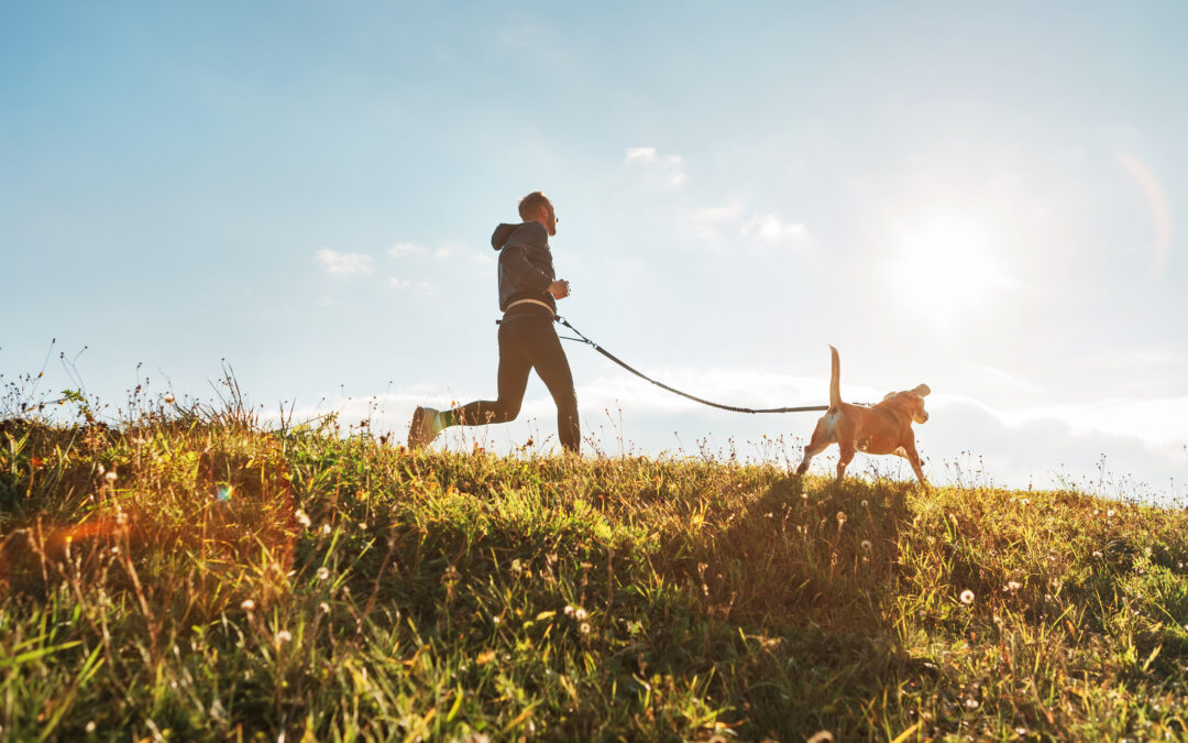 essential exercise for dogs