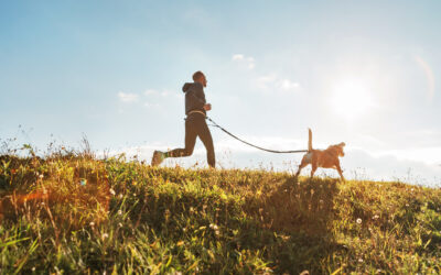 How to Provide Essential Exercise for Dogs at Home and Away