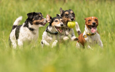 When and How to Enroll Your Puppy in a Quality Doggie Daycare Program